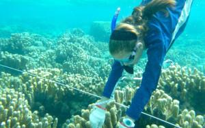 Sampling coral in a Saipan lagoon.