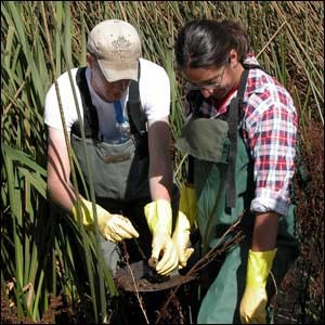 Owen Leiser and Theresa McHugh, former NAU students, collect samples for molecular analysis for a research project linking genetic information with cleanup of pollutants in regional constructed wetlands. This type of research integration will be characteristic of projects funded by the new grant.