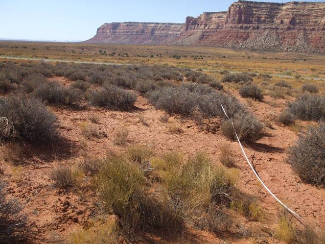 Cedar Mesa in southeast Utah.