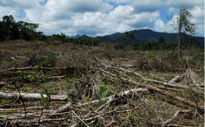 Deforestation in Honduras.