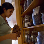 Deaver Herbarium pinecones