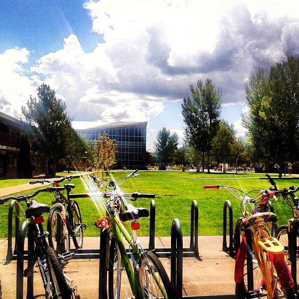 NAU bike rack in the summer