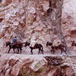 Donkeys traverse the canyon