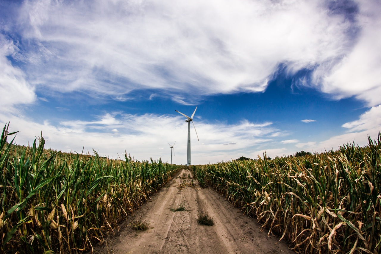 A dirt road through a crop field leads to a wind turbine.