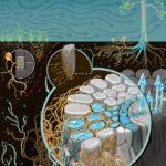 soil fungi