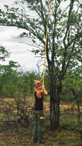 Measuring tree height.