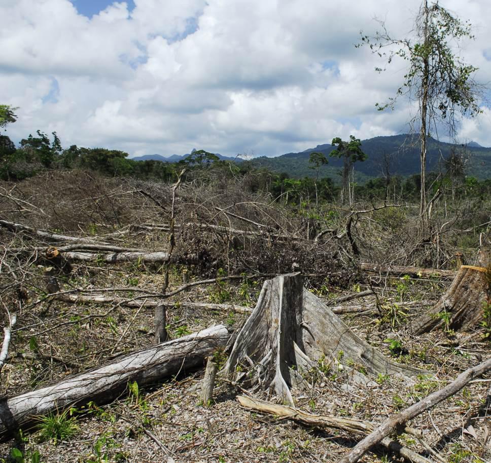 Area of narco-deforestation in Honduras.