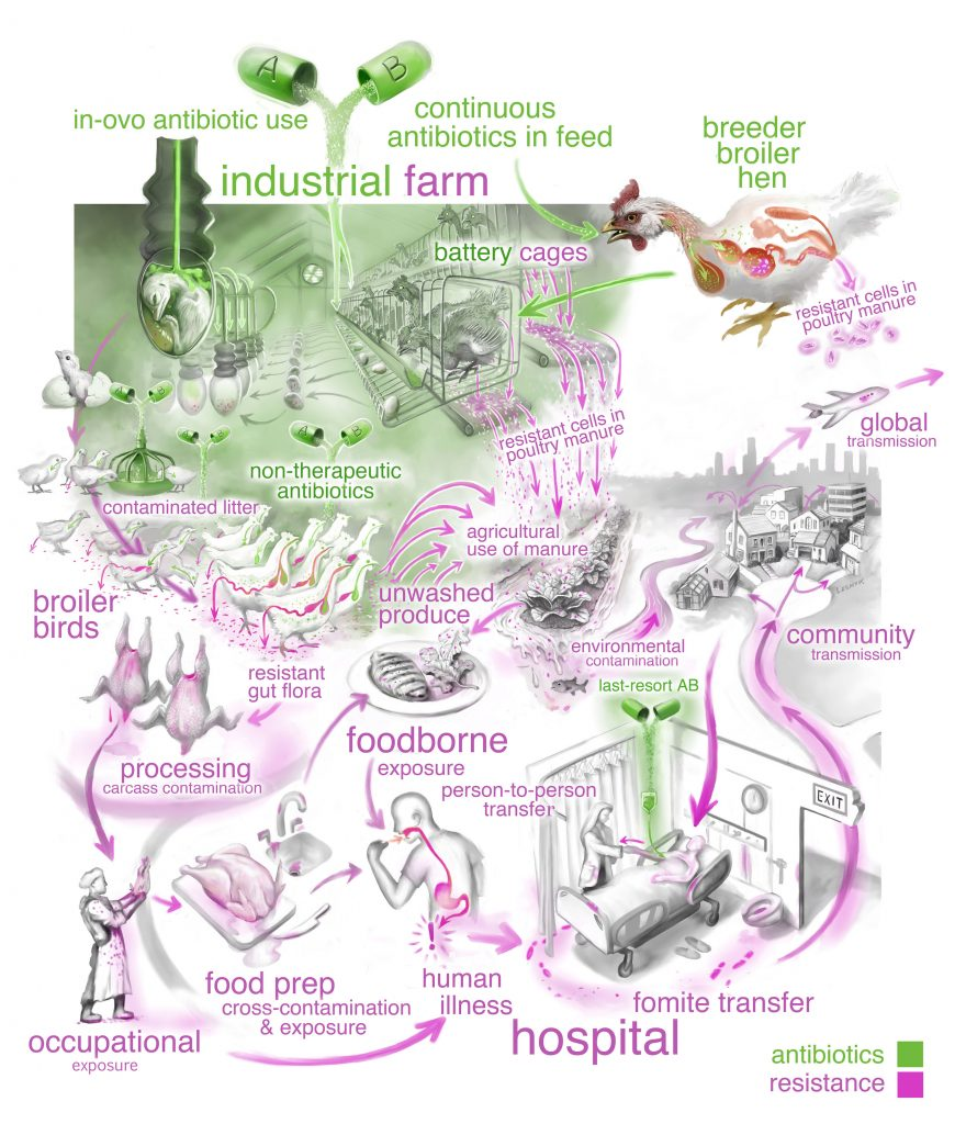 Antibiotic-resistance pathways