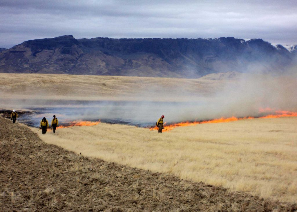 Prescribed_burn-remove-cheatgrass