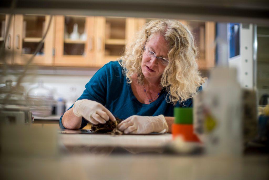 Professor Michelle Mack