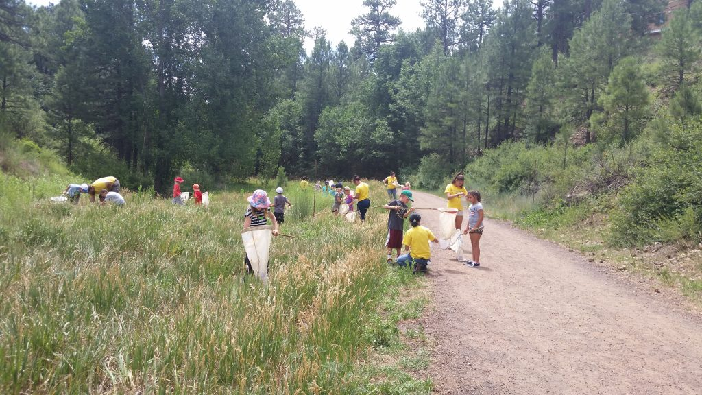 Campers collecting insects