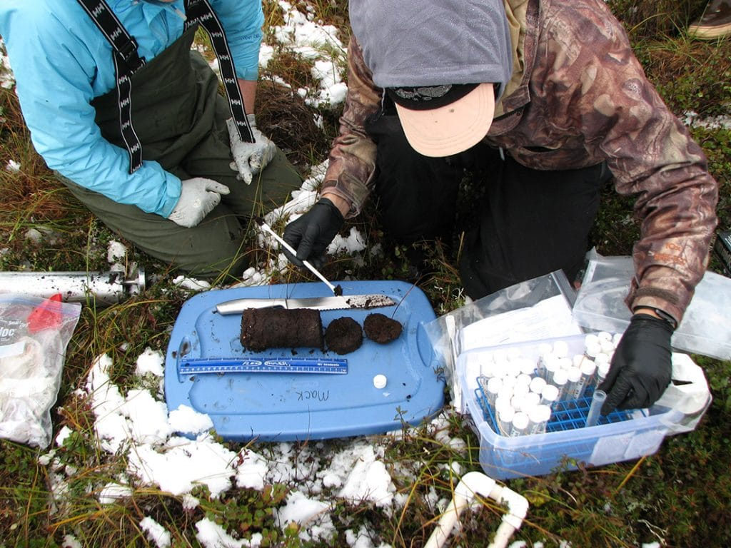 Hewitt field work