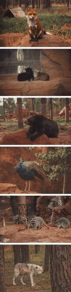 Animals of Bearizona