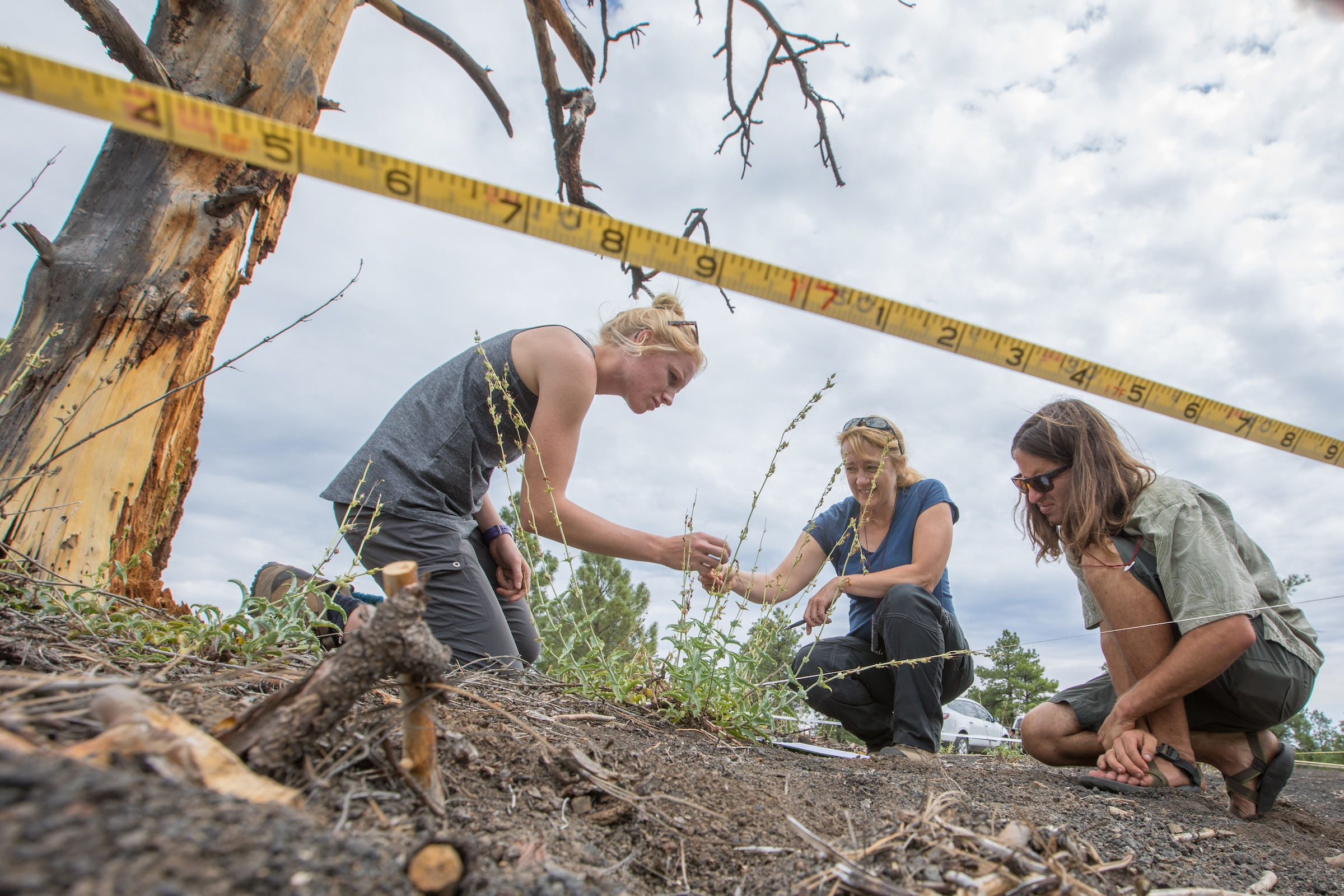 Ecological Restoration Institute student research project