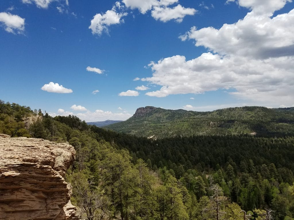 Overview of Northern Arizona forest