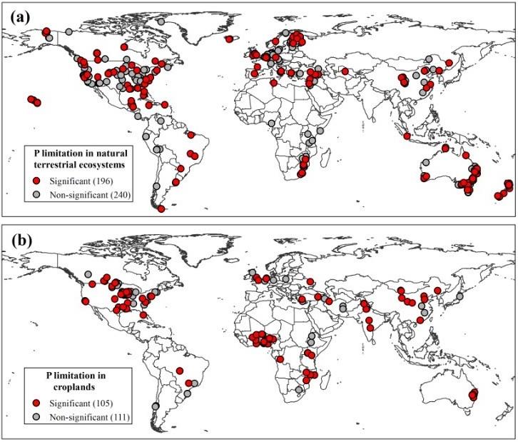 Phosphorous Maps