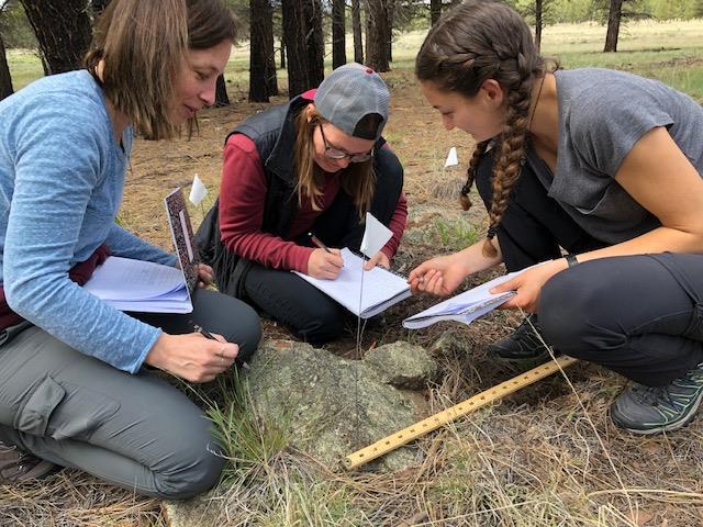 Lichen REU team does research