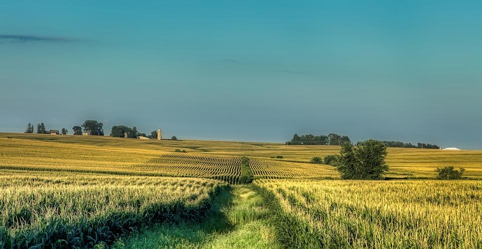 America Farm Iowa Landscape Cornfield Corn