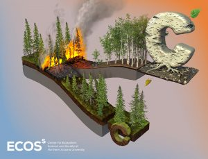 graphic about birch fires
