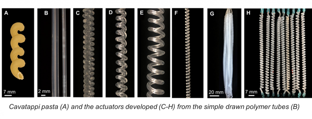 Cavatappi pasta (A) and the actuators developed (C-H) from the simple drawn polymer tubes (B)